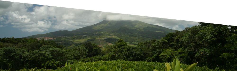 plantationmacintosh